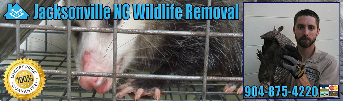 Jacksonville Wildlife and Animal Removal
